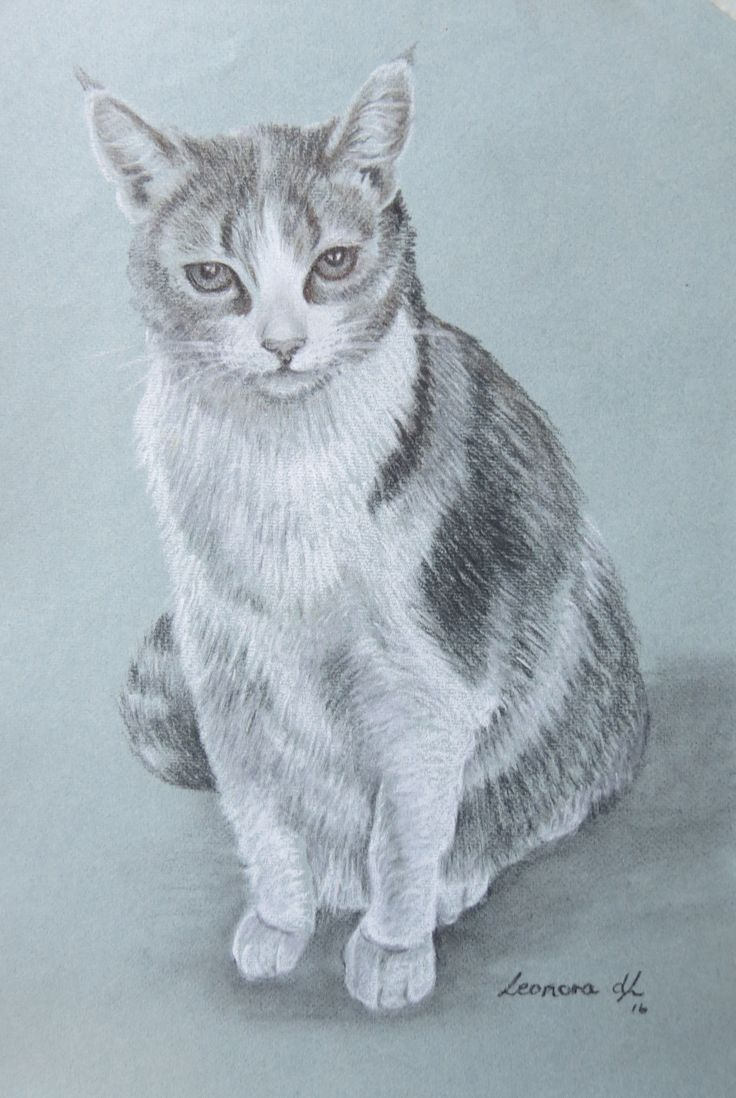 "Leonora de Lange "" My Baby Cat"" Charcoal and chalk on pastel paper. 48 x 32 cm"