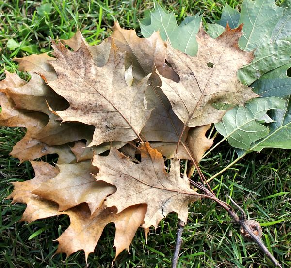 Fall leaf crafts that you'll actually want to make and display in your home! These aren't your kindergartner's leaf crafts!