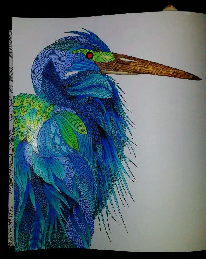 coloring ideas-ibis
