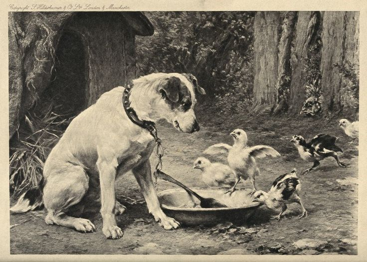 A dog on a chain is watching a couple of chicks trying to reach his food bowl. The Wellcome Library, CC-BY