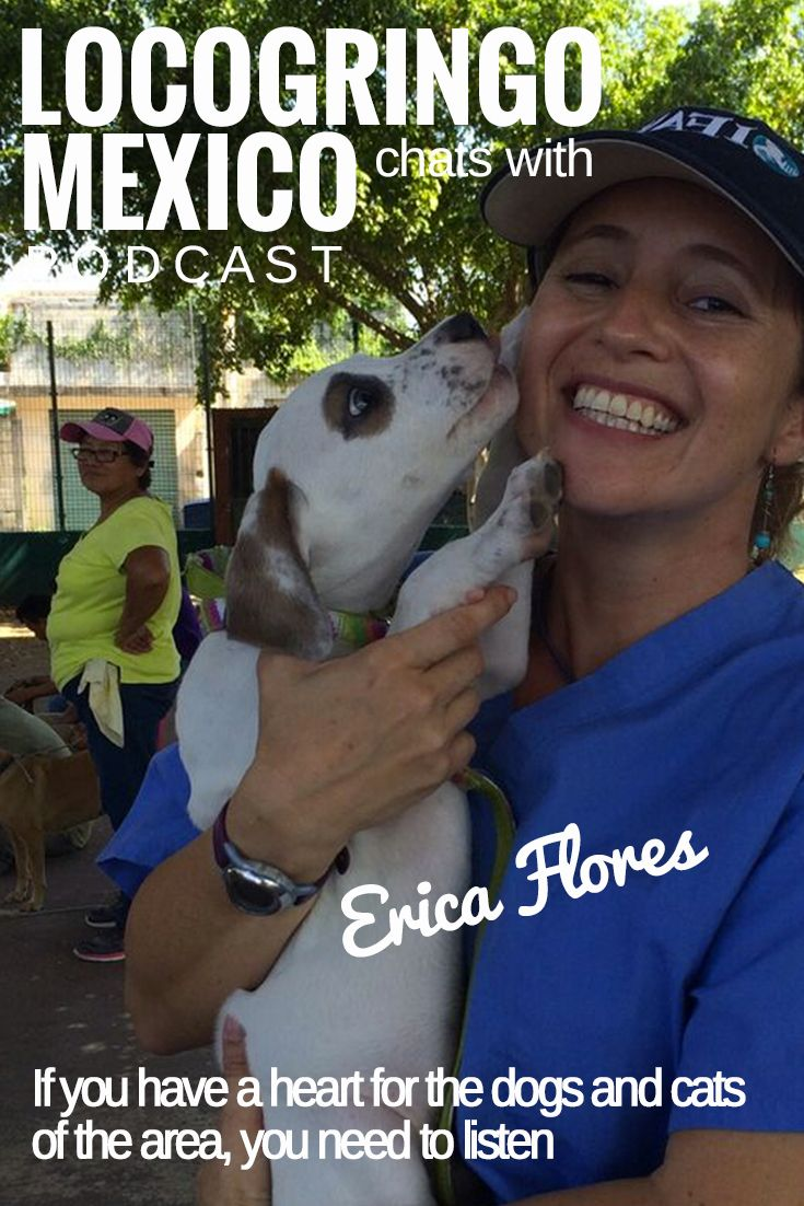 What does a happy dog look like? Veterinarian Erika Flores, offers advice how you can help...  Find a local organization that works with needy animals and see if they need a donation for food or someone to walk the animals.  Become a Sponsor – Sponsor an animal or the cost of a surgery.  Don't Put Wild Animals at Risk by Taking Pictures.  Click the link to learn more...
