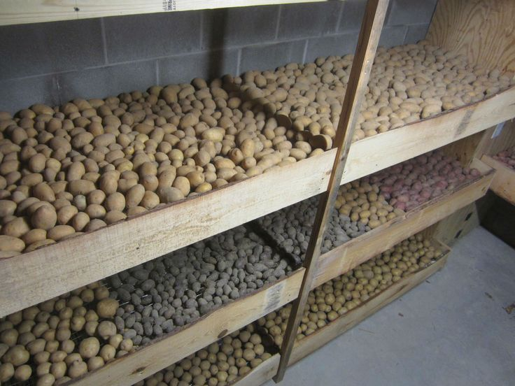 Potatoes are among the most popular foods to be stored in a root cellar.