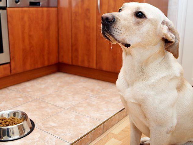 Veja aqui quantas vezes por dia você precisa dar ração para o seu cão e qual a melhor estratégia para alimentá-lo.