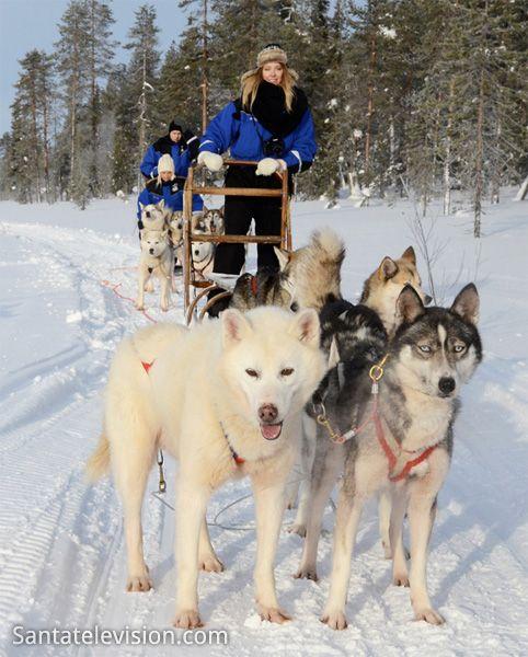 Husky Safaris in Lappland in Finnland