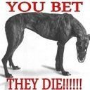 Urgent news; More greyhounds have been sent to China over the last few days.  These dogs have nil chance of getting out alive.  Please copy and paste the below to Twitter to reach the Irish Embassy  @DanMulhall @IrelandEmbGB -Stop the Irish greyhounds being sent to China !!! #racedtodeath   Thank you