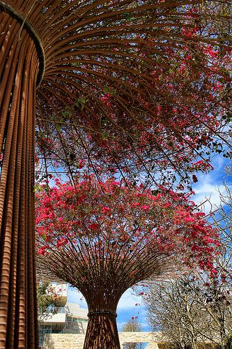 Rebar Bougainvillea trees at The Getty Center | Flickr - Photo Sharing!
