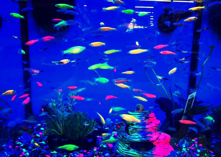 Black light fish my life pinterest black lights for Black light for fish tank