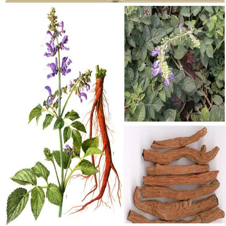 Big sale! The seed plants of Salvia miltiorrhiza herb seeds in plant seeds can be used as medicine #Affiliate