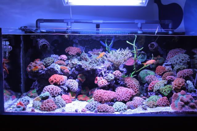 ... braden fish reef tanks fish tanks awsome fish forward reef tank
