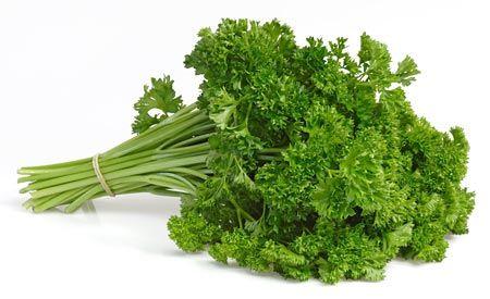 (Zentrum der Gesundheit) - Petersilie ist viel mehr als die grüne Dekoration auf dem Tellerrand. Sie ist so vitalstoffreich wie ein Multivitaminpräparat und für die Gesundheit meist nützlicher als die Speise, die sie schmückte.