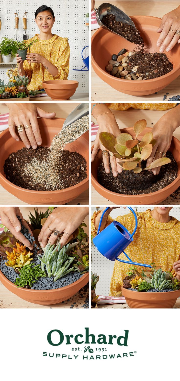 Be a good succulent caretaker some tips as you get