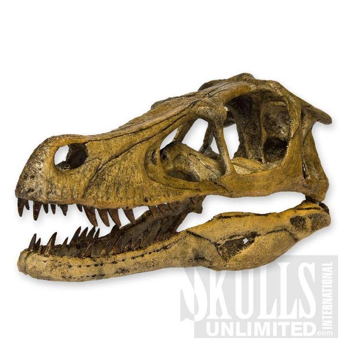 Velociraptor Skull $139 Someone please buy this for me ...