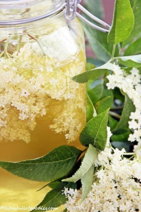 Holunderblütensirup  Holunder findet Ihr überall, auf Wiesen, im Wald, die großen weißen Blüten sind nicht zu übersehen. Einfach die Blütendolden abschneiden und mit nach Hause nehmen.  Kleiner Tipp: Gut aufpassen, dass an den Blüten keine kleinen schwarzen Läuse dran sind! Die lieben den Holunder nämlich auch und hängen häufig an den Stängeln unter den Blüten.  Hier das Sirup-Rezept:  2 Liter Wasser  50 g Zitronensäure  1 kg Zucker  1/2 Zitrone (in Scheiben geschnitten)  ca. 25 große…