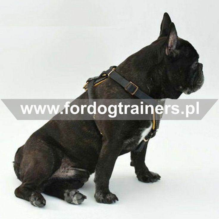 Szelki skórzane dla małego psa bardzo wygodne w eksploatacji, łatwo zakładane i zdejmowane dzięki regulowanym paskom, wzmocnione specjalną nicią. Ten produkt dla psów jest bardzo delikatny do sierści psiaka, ponieważ chroni go przed otarciami dzięki miękkiej wyściółce z gładkiej skóry.