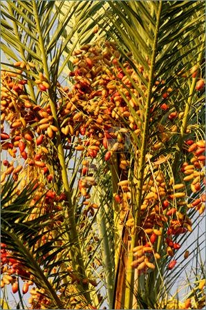 how to grow palm trees from seed uk