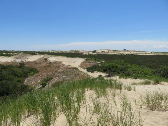 The Province Lands Of Cape Cod Picture Of Art S Dune Tours