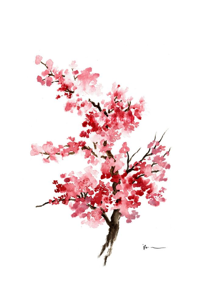 Cherry blossom branch Watercolor painting Pink by ColorWatercolor