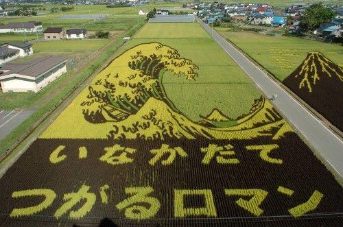 田んぼアート Tambo Art, l'Art des Rizières