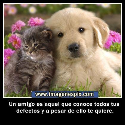 Imagenes con frases facebook   Imágenes de amor : Imágenes de animales con frases de amistad para et...
