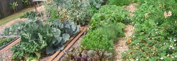 Bungunya Community Garden Detail: Rows of organic veggies and flowers