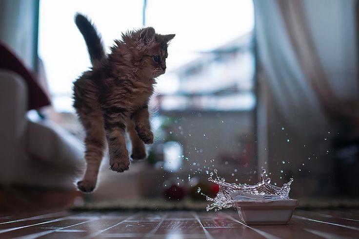 52 magnifiques photos de chats qui sautent   53 superbes photos de chats qui sautent jumping cats 12