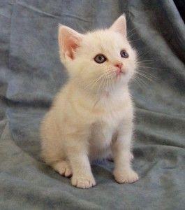 Tabby Cat 06