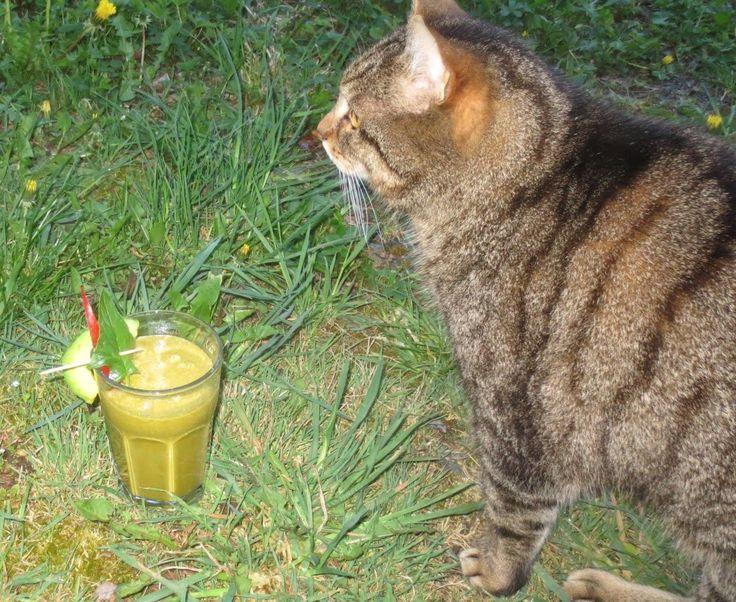 Avocado-Gemüse-Shake mit neugierigem Kater - http://barbaras-spielwiese.blogspot.de/2014/05/vitamix-test-und-gruner-smoothie.html