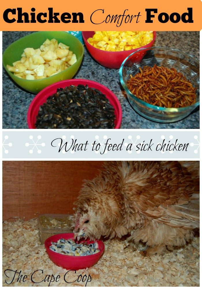 Is your chicken feeling under the weather?  Make her up some Chicken Comfort…