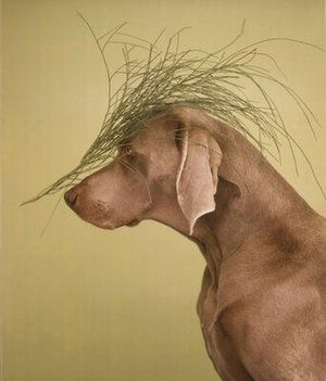 William Wegman and Weimaraner - Coolspotters