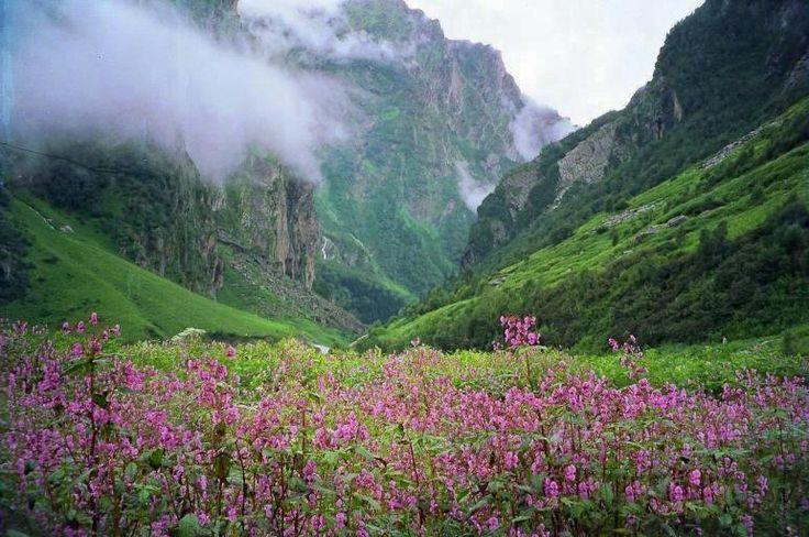 Valley of Flowers & Hemkund Sahib Trek, #Uttarakhand Call - 9386591169  #VacationTravel #Travel #Tours #Hills #adventure #Trek #pilgrimage