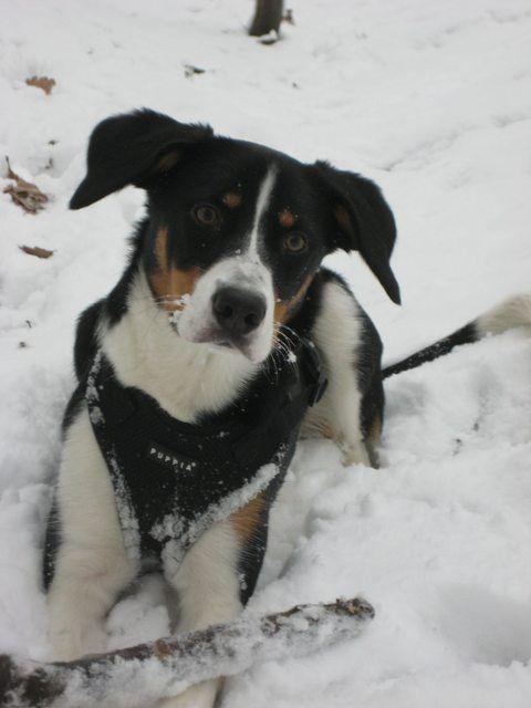 Labrador Retriever x Jack Russell mix | Mischlings-Foto-Domino - Page 49 - Sonstiger Talk rund um den Hund - DogForum.de das große Hundeforum