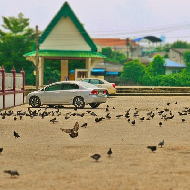 merpati. #bird #carpark #car #Honda #civic #miniaturized #miniature #tiltshift #hatyai - nunutngombe @ Instagram Web Interface - 5th village