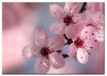 Bloesem staat in japan symbool voor vergankelijke schoonheid. Maar dit schilderij blijft voor altijd.