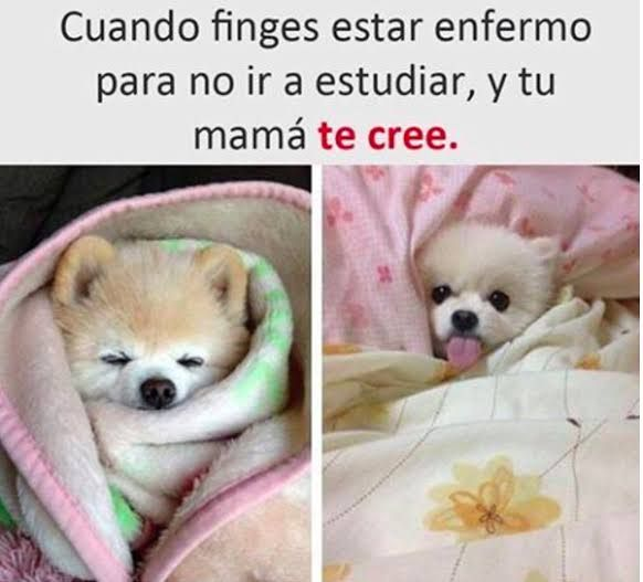 Memes Divertidos En Espanol Funny Memes Memes Funny Faces Viral Videos Funny