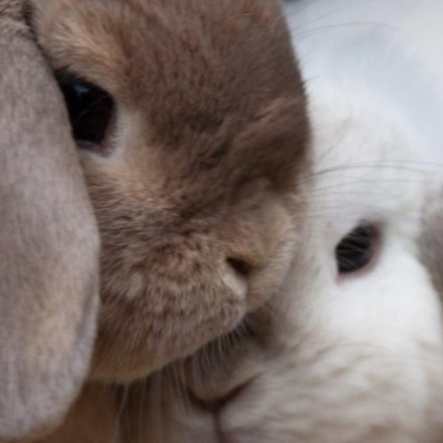 awwwwRabbit, Animal Baby, Funny Bunnies, Marriage Propos, Easter Bunnies, Baby Bunnies, Baby Animal, Cuddling Buddy, Furries Friends