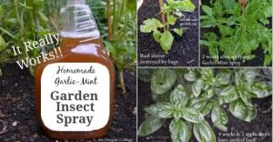 Garden Bug Spray