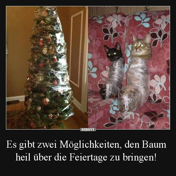 Es gibt zwei Möglichkeiten, den Baum heil über die Feiertage zu bringen! | Lustige Bilder, Sprüche, Witze, echt lustig