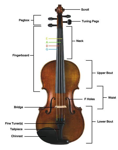 1000+ images about Parts of the violin on Pinterest ...
