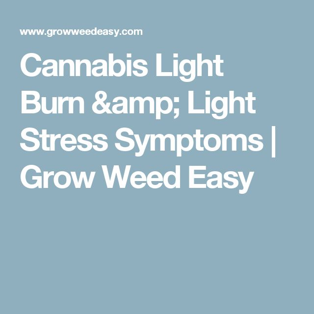 Cannabis Light Burn & Light Stress Symptoms | Grow Weed Easy