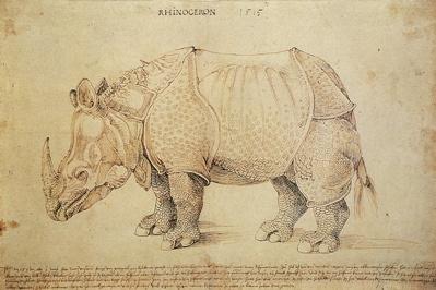 Rhino by Albrecht Dürer 1515