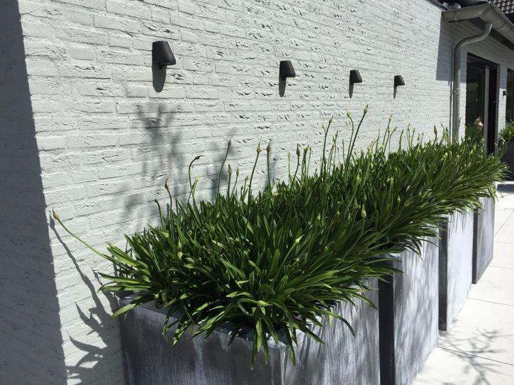 Groenseizoen - Strakke moderne tuin - Hoog ■ Exclusieve woon- en tuin inspiratie.