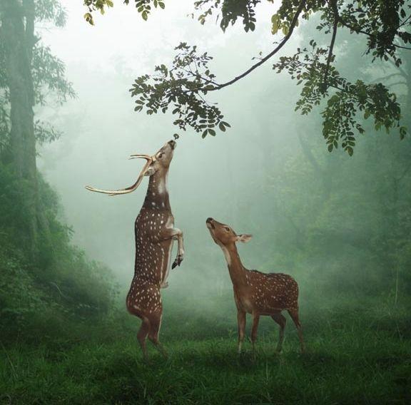 Reach for a dream...  #animals #fauna