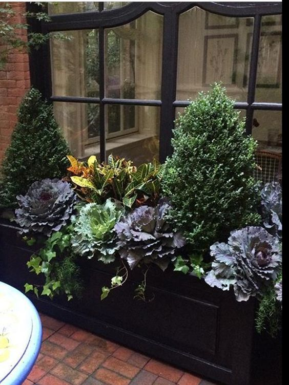 Get the look: Pair of good-sized, cone-shaped boxwood (Winter Gem Boxwood) + cascades of English Ivy + dark and light hued ornamental cabbages + orange and yellow crotons