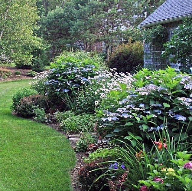 Seasonal Views of a Special Garden in MA | Fine Gardening. The beautiful flowering lacecap hydrangea shrubs add height and more interest to lovely landscape.