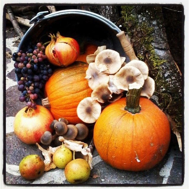 #Autunno | #fall #Autumn #Halloween #pumpkin #orange #red #countryside #MyInstagramPhoto #igersitalia #igers