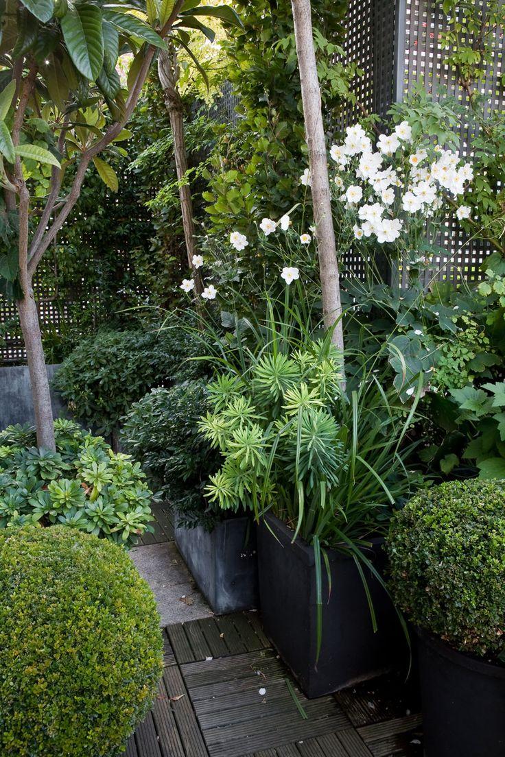 Best 20 lattices ideas on pinterest lattice wall patio for Jardin 16eme