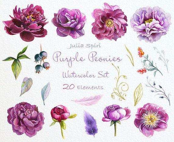 Watercolor Peonies Flowers Clipart Purple Violet by JuliaSpiri