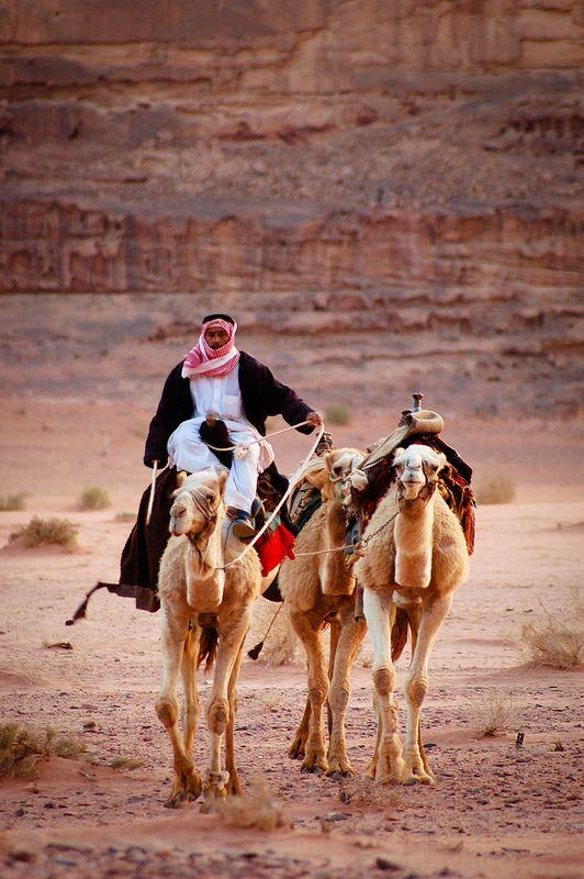 Bedouin man and camels, Wadi Rum, Jordan