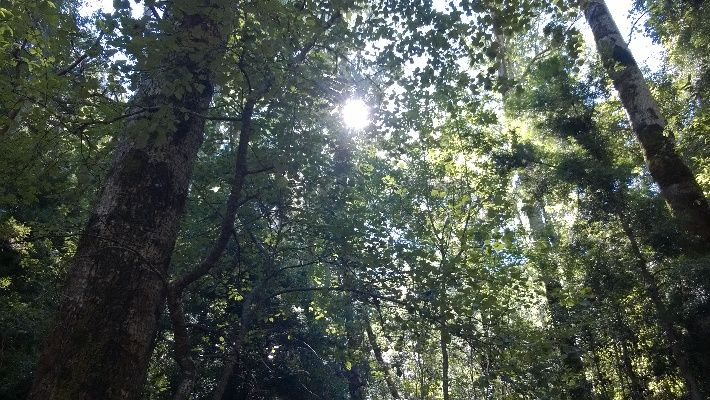 Sunlight through the trees at Cecilia Stream. See more http://exclusivegetaways.co.za/2015/01/05/a-walk-along-cecilia-stream-green-and-serene-on-a-summers-day-in-cape-town/