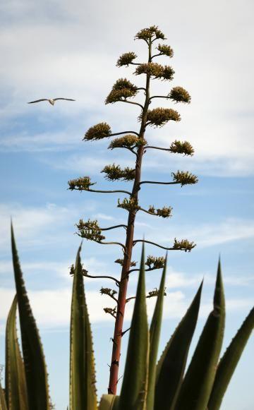 9 best urbanjungle images on pinterest bedroom cactus and cactus plants. Black Bedroom Furniture Sets. Home Design Ideas